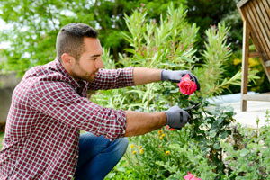 Pruning commercial landscape